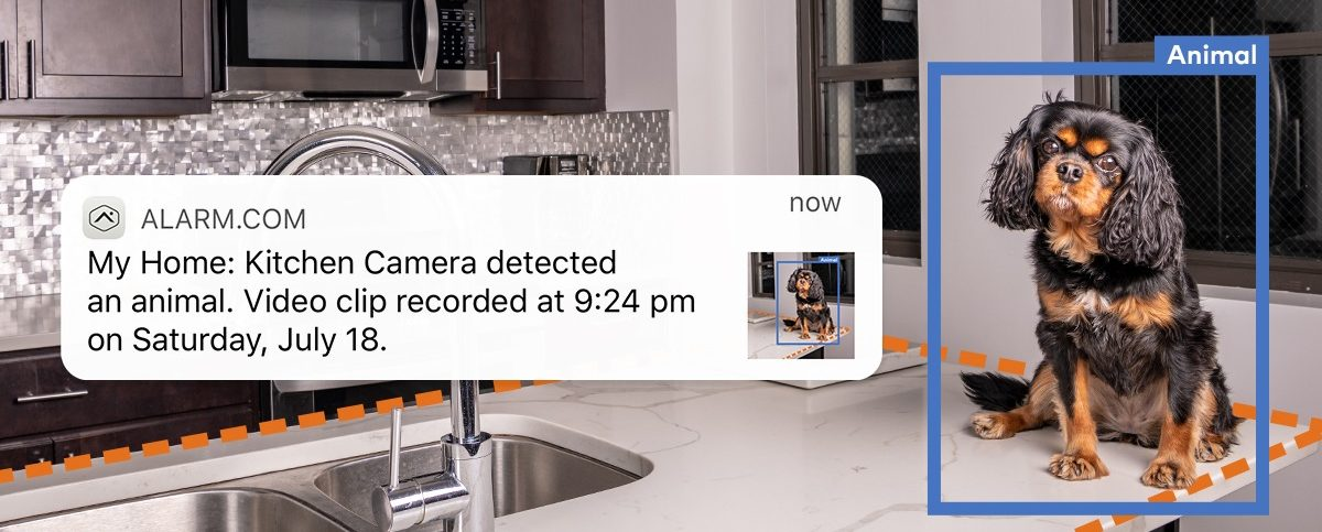 Pet Owner Video Analytics dog in the house Amherst Alarm Alarm.com