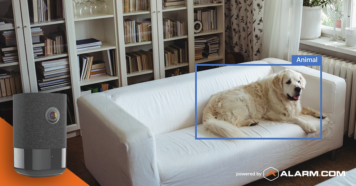 Pet Owner Video Analytics dog on the couch alarm.com